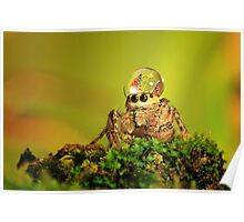 spider, dew and butterfly mating Poster