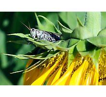 A Flowerhopper Photographic Print