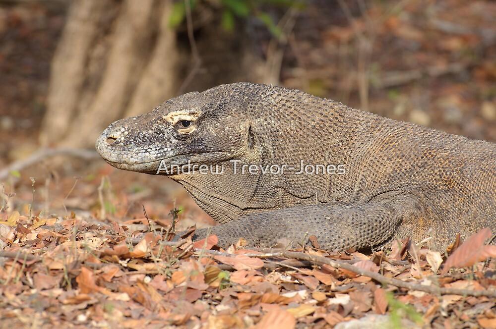 Komodo Dragon - Varanus komodoensis by Andrew Trevor-Jones
