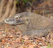 Komodo Dragon - Varanus komodoensis by Andrew Trevor-Jones