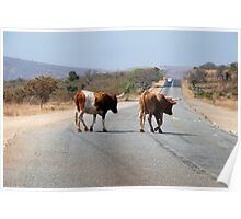 Cow crossing!! Poster