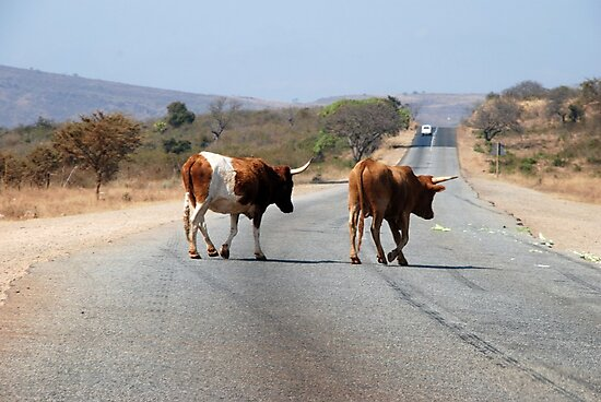 Cow crossing!! by gogston