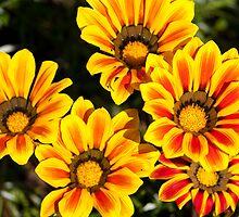 Spring flowers by bindabee
