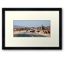 Cows defying the authorities! Framed Print