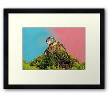 full colors Framed Print
