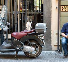 Alors andiamo?!  Can we go now?!  Street scene, Orvieto, Umbria. Italy by Andrew Jones