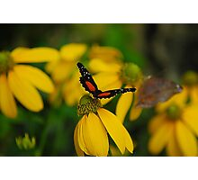 Butterfly Landing Softly Photographic Print