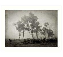 Misty Field Art Print