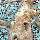 The Aleppo Tree - 2012 by Sue Flask
