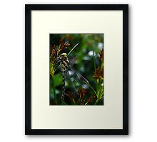 Dragon-newly hatched! Framed Print