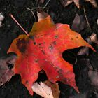 Remnants of Autumn by shutterbug2010