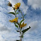 Flower in Sky by orko