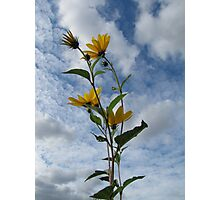 Flower in Sky Photographic Print