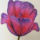 Violet Queen by Susan Duffey