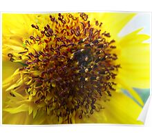 Sunflowers on Sunny days Poster