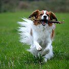 One happy dog! by Javimage