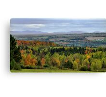 Evergreen Trees nestled among colorful Fall Trees Canvas Print