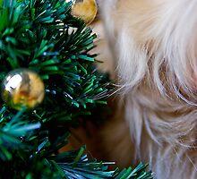 Have a Golden Christmas by kraMPhotografie