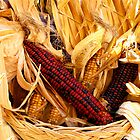 Decorative Red and Yellow Indian Corn by Chantal PhotoPix