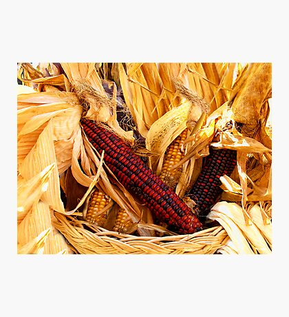 Decorative Red and Yellow Indian Corn Photographic Print