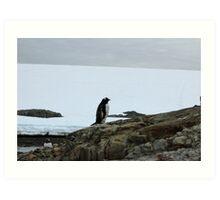 Lone Penguin Art Print