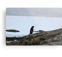 Lone Penguin Metal Print