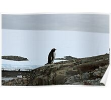 Lone Penguin Poster