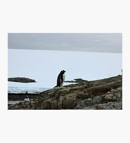 Lone Penguin Photographic Print