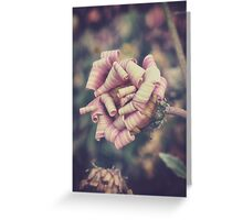 sweet pink african daisy Greeting Card
