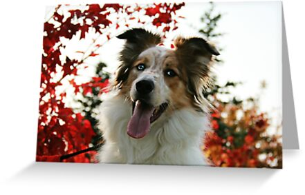 Autumn Dog by Laura-Lise Wong