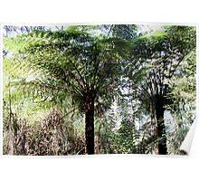Dandenongs, rain forest Poster