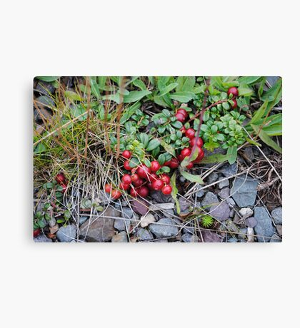 Forest Gems  Canvas Print