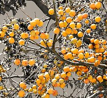 Persimmon Fruit by Sharon Woerner