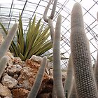 Cacti by cactus82