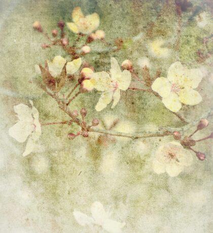 Faded Blossoms Sticker