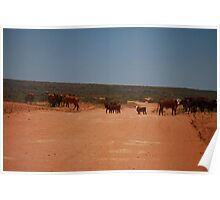 Stock Crossing on Outback Track - Western Australia Poster