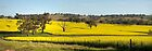 Canola Season ~ South West Slopes by Rosalie Dale