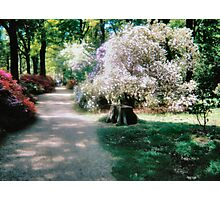 WHITE MIST  Isabella Plantation Richmond Surrey Photographic Print
