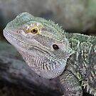 Portrait of a Dragon Lizard by aussiebushstick