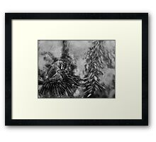 Barbary Macaque and Infant Framed Print