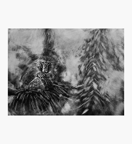 Barbary Macaque and Infant Photographic Print