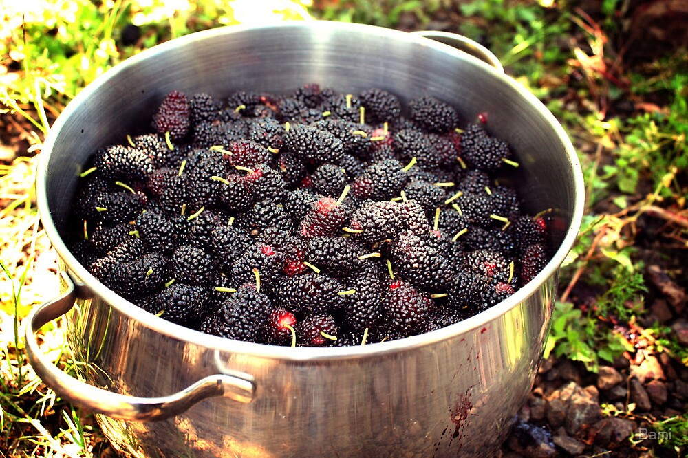 Spring Mulberries by Bami