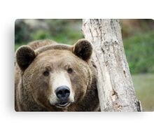 Beary Brown Bear Canvas Print