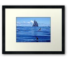 Shearwaters near Ball's Pyramid Framed Print