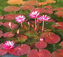 Autumn water lilies by Samohsong