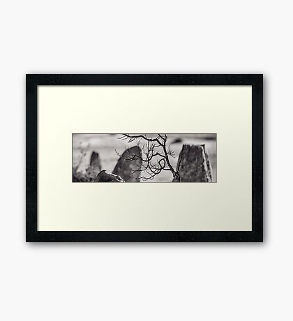 Branching Framed Print