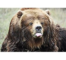 Sticking tongue out Bear Photographic Print