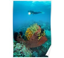 Diver and feather stars Poster