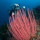 Underwater photographer with vivid red coral by Stephen Colquitt