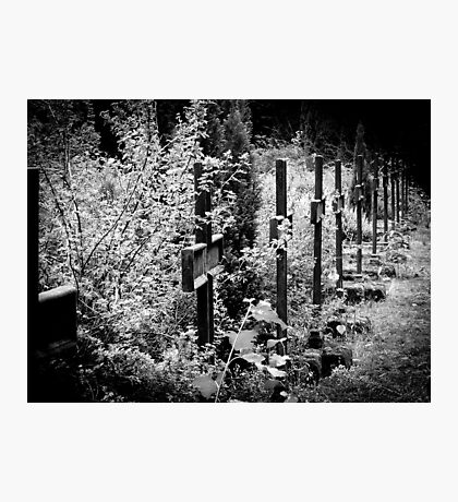 lost cemetery Photographic Print